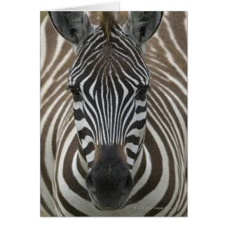Common Zebra (Equus quagga), close up Card