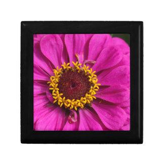 Common zinnia (Zinnia elegans) Gift Box