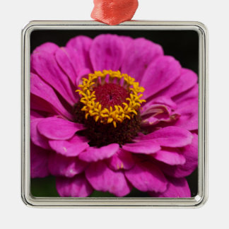 Common zinnia (Zinnia elegans) Silver-Colored Square Ornament