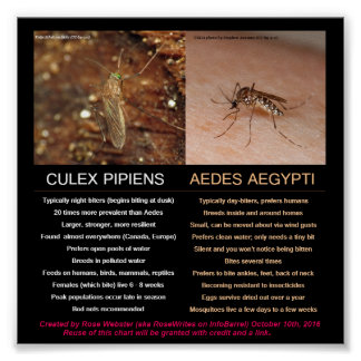 Comparing Zika-Carrying Mosquitoes by RoseWrites Poster