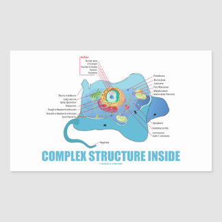 Complex Structure Inside (Eukaryotic Cell)