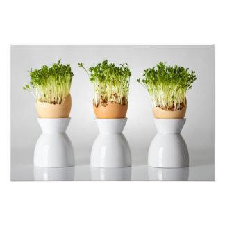 Composition en Pâques avec des verts en oeufs avec Impression Photographique