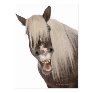 Comtois horse is a draft horse - Equus caballus Postcard