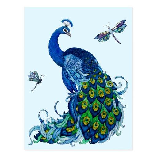 Conception classique de paon et de libellule cartes postales
