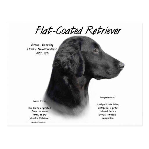 Conception Plat-Enduite d'histoire de chien d'arrê Cartes Postales