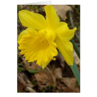 Conceptions jaunes de fleur de Jonquils de ressort Carte De Vœux
