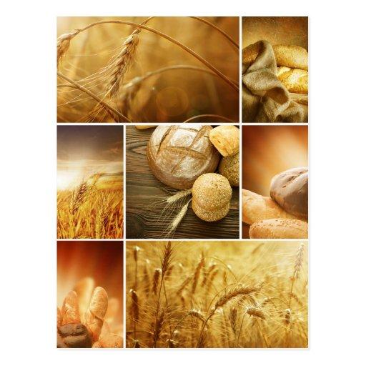 Concepts de Wheat.Harvest. Collage de céréale Cartes Postales