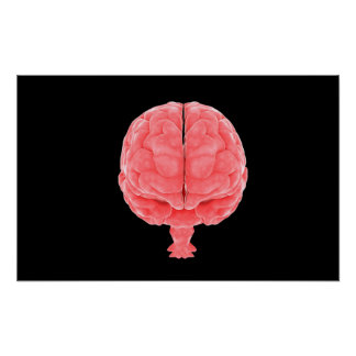 Conceptual Image Of Human Brain 3 Poster