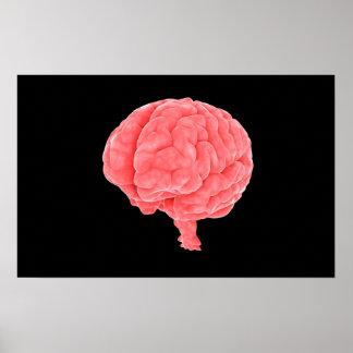 Conceptual Image Of Human Brain 5 Poster