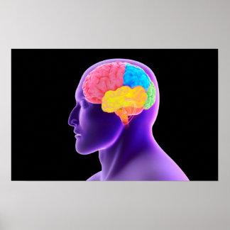 Conceptual Image Of Human Brain 7 Poster