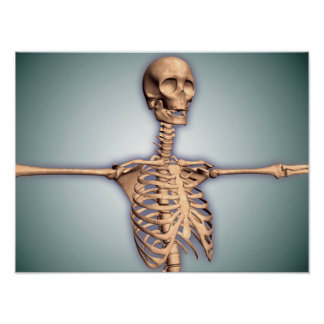 Conceptual Image Of Human Rib Cage And Spinal Poster