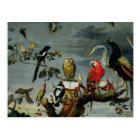 Concert of Birds Postcard