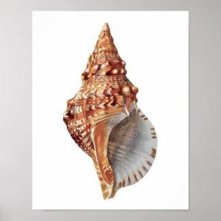 Conch Sea Shell no.3 Beach Home Decor Art Print