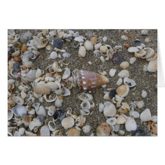 Conch Seashell Treasure Card