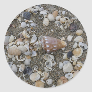 Conch Seashell Treasure Classic Round Sticker