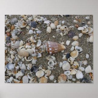 Conch Seashell Treasure Poster