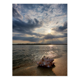 Conch Shell At Beach | St. Augustine, Fl Postcard
