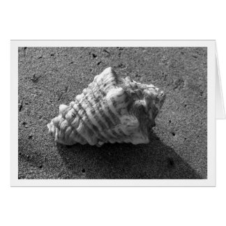 Conch Shell (Black and White) Card