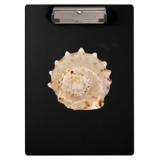 Conch Shell Clipboard