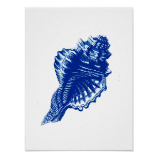 Conch Shell, Indigo Blue and White Poster