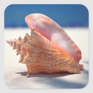 Conch Shell On Beach 2 Square Sticker