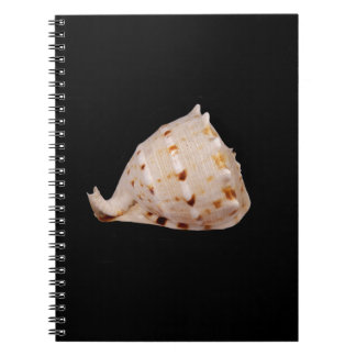 Conch Shell Photo Notebook