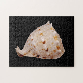 Conch Shell Photo Puzzle with Gift Box