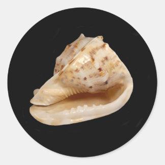 Conch Shell Sticker