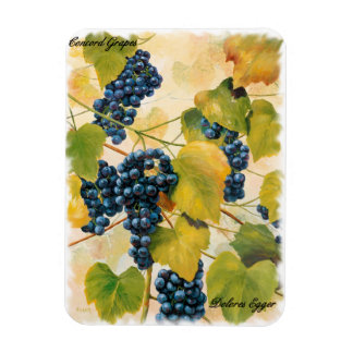 Concord Grapes on the Vine Rectangular Photo Magnet