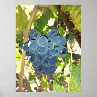 Concord Grapes Poster