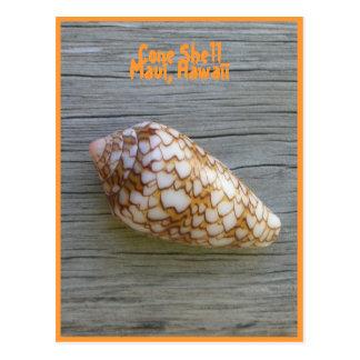 Cone Shell Postcard