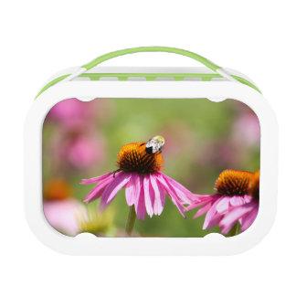 Coneflower and Honey Bee Lunch Box
