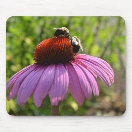 Coneflower and two Bees  Mousepad