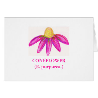 CONEFLOWER(E. purpurea.) Card