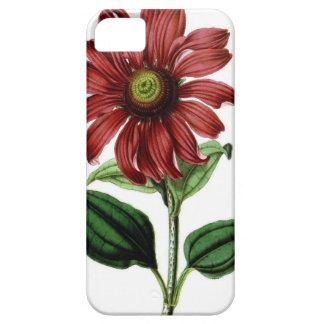 Coneflower iPhone 5 Case