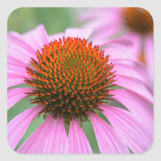 Coneflower Square Sticker