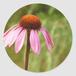 Coneflower Sticker