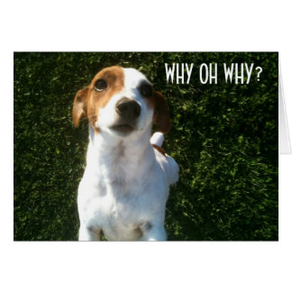 "CONFUSED JACK RUSSELL ""40th"" BIRTHDAY Card"