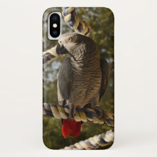 Congo African Grey on a Swing iPhone X Case
