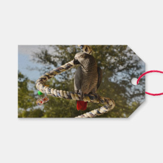 Congo African Grey on a Swing Pack Of Gift Tags