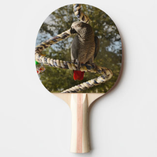 Congo African Grey on a Swing Ping-Pong Paddle