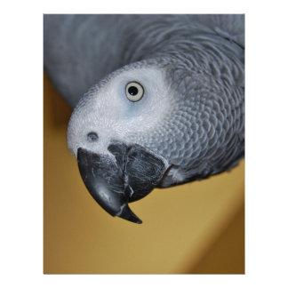 Congo African Grey Parrot Hello Custom Letterhead