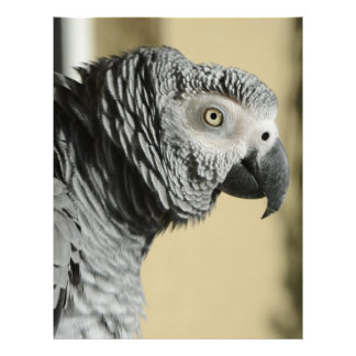 Congo African Grey Parrot with Ruffled Feathers Letterhead