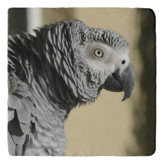 Congo African Grey Parrot with Ruffled Feathers Trivet