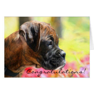 Congratulations Boxer Puppy Greeting Card