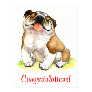 Congratulations Bulldog Puppy Dog Postcard