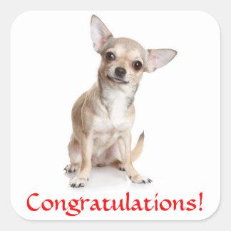 Congratulations Chihuahua Puppy Sticker