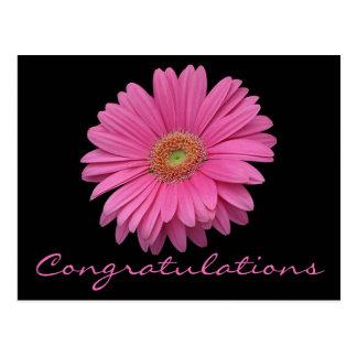 Congratulations Pink Gerbera Daisy Flower Black Postcard