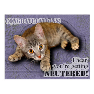 Congratulations! You're being neutered! Postcard