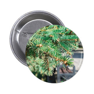 Conifer branch at the city street 2 inch round button